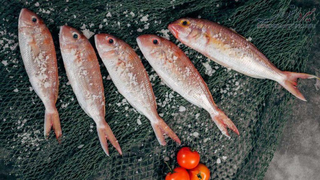 ماهی و میگو خوب در شیراز معرفی بهترین فروشگاه ماهی و میگو شیراز